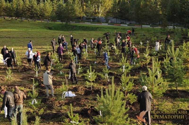 Высадка сосен в Парке Памяти