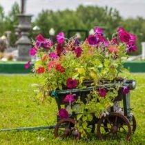 цветы парк памяти