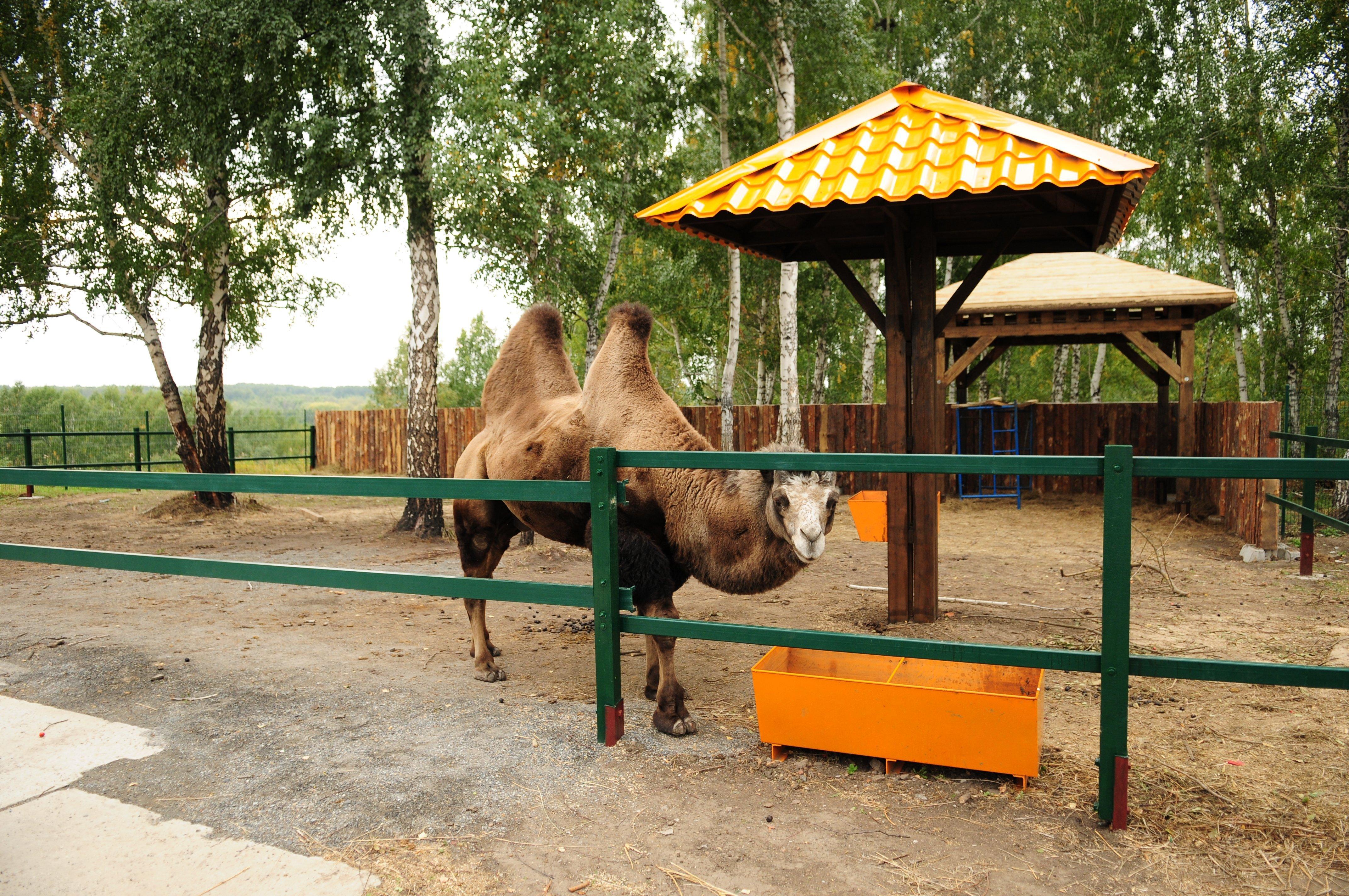 Животные в парке Новосибирского крематория